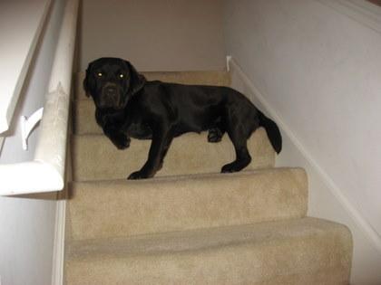 階段、ニガテなんだけどぉぉ実は落ち着く場所なのだ!