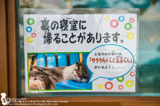 写真: katurahama140525003