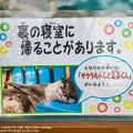 Photos: katurahama140525003