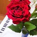 Photos: 薔薇と鍵盤。