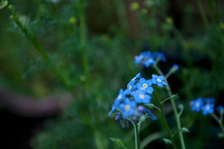 青い花(別Ver.)