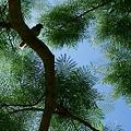 Photos: 鳥影