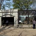 Photos: 夢見ヶ崎動物公園のレッサーパンダ舎
