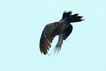 カメラを向けると飛び立った鳩