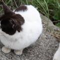 写真: 鋸山にいた、猫 4