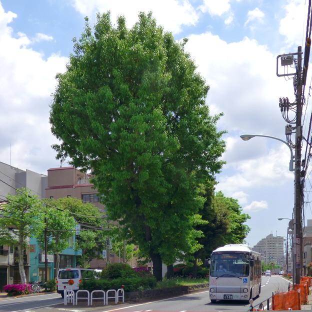 Photos: 西ヶ原一里塚?