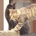 野良猫 vs 撮影者!??