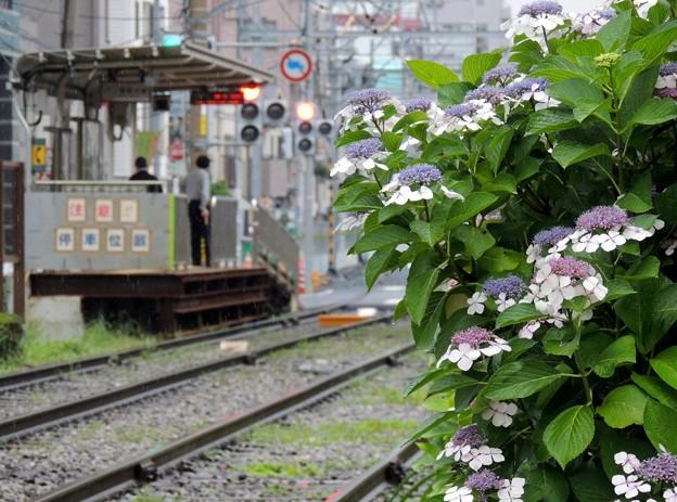 雨の都電荒川線(1)