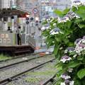 写真: 雨の都電荒川線(1)