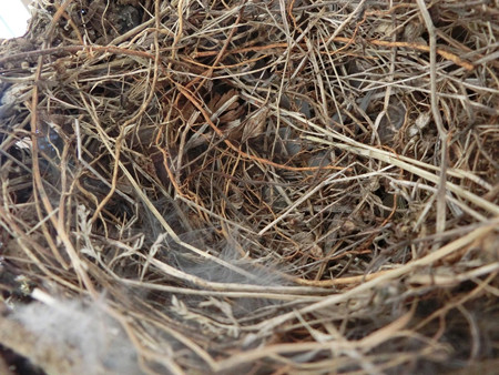 リフォームされた巣