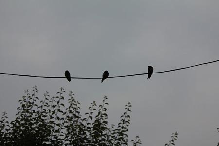 追い出された三羽