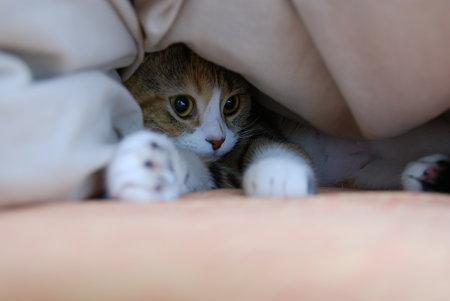 寒いから、お布団の中