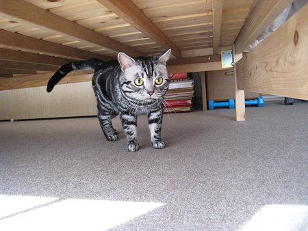 ベッドの下を探検中。