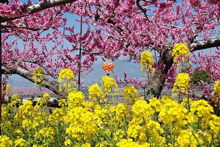 春の花とバルーン