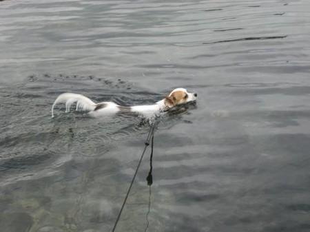 泳ぐチワヨン