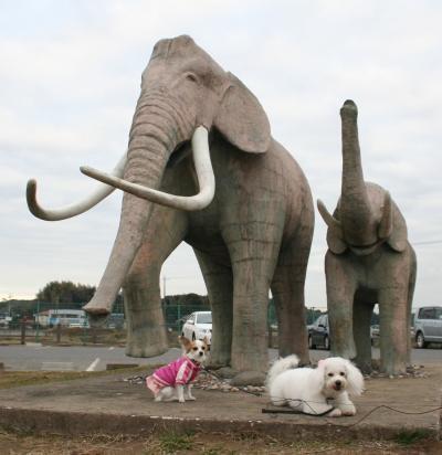 双子公園の象の像
