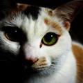 写真: 三毛猫