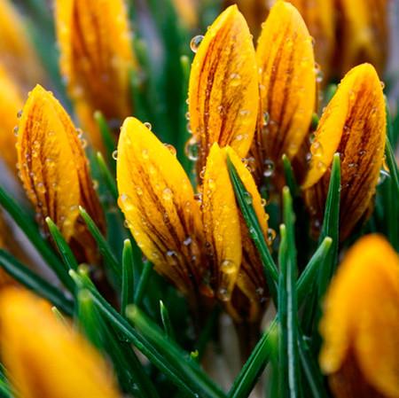 16-spring