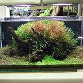 2009年度 第27回日本観賞魚フェア 水槽ディスプレイコンテスト 90cm水槽の部 優勝
