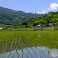 稲作農業は日本の環境を美しくするとワタクシは考える