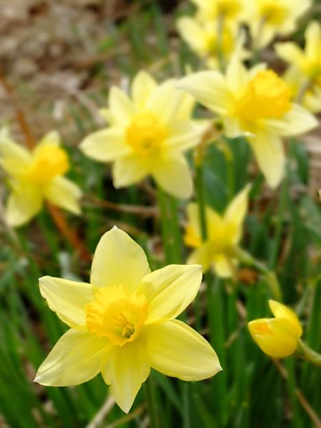 いもり池の黄色い花