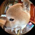 Photos: バンビ?