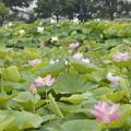 世界の花たち