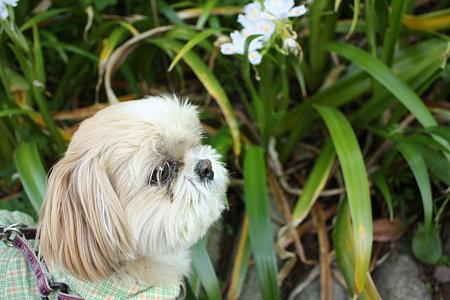 お花には興味なし。
