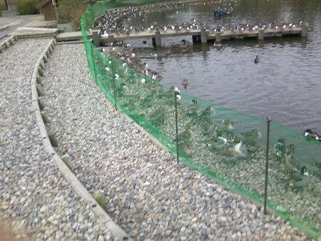 柵のあるお幕場大池公園(1)