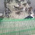 写真: 柵のあるお幕場大池公園(4)