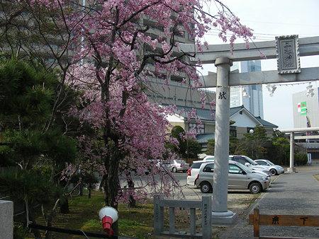 三社神社鳥居としだれ桜