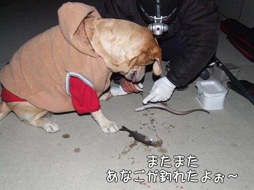 s-myu2008_1212(083)