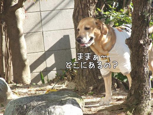 s-myu2008_1219(034)