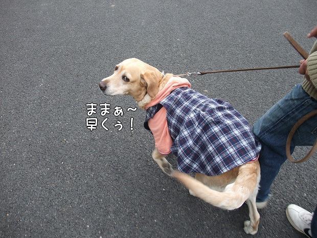 s-myu2008_1221(021)