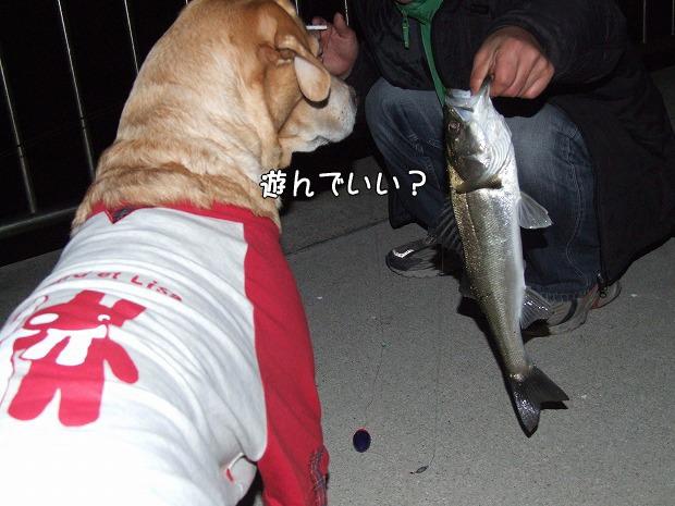 s-myu2008_1224(080)