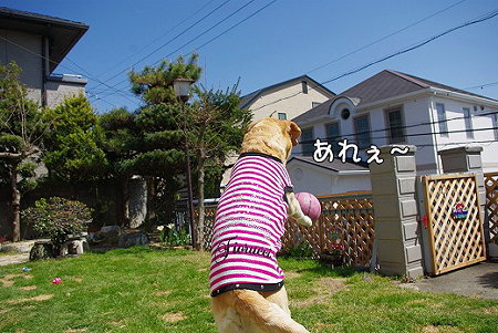 s-myu2009_0330(076)