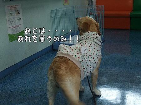 s-myu2009_0420(012)