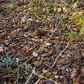 写真: 藪をかきわける