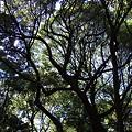 写真: 樹木の向こうの…