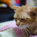 写真: 2009年6月26日のボクチン(5歳)
