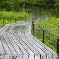 木道の梅雨4