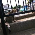 写真: 猫の朝