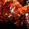 写真: 岡崎公園にて