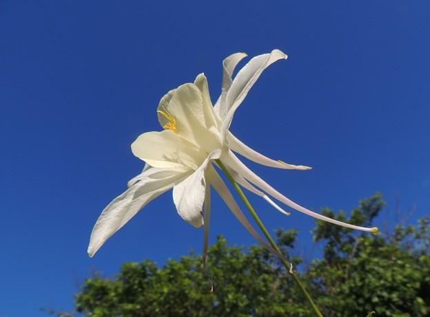 庭の白花-4