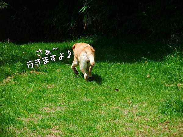 s-2008_0727myu0059