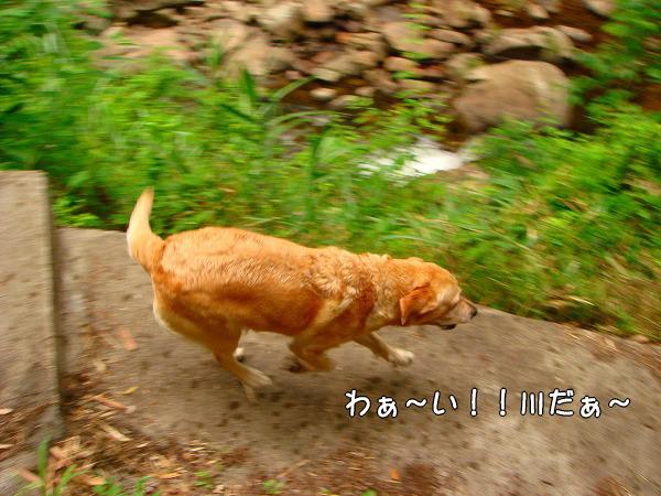 s-2008_0727myu0091