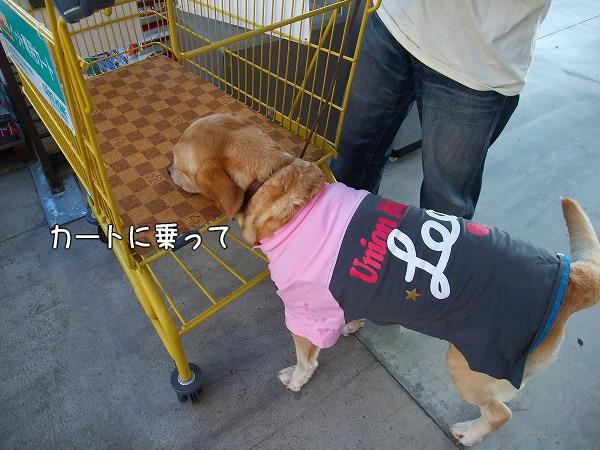 s-2008_0813myu0087