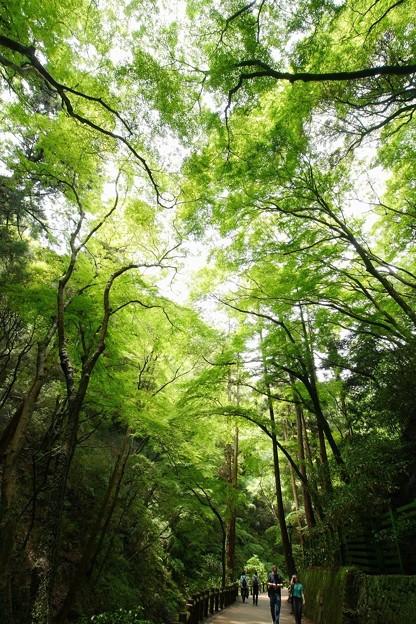 新緑の散策路