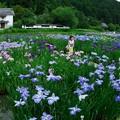 Photos: 菖蒲園を走る
