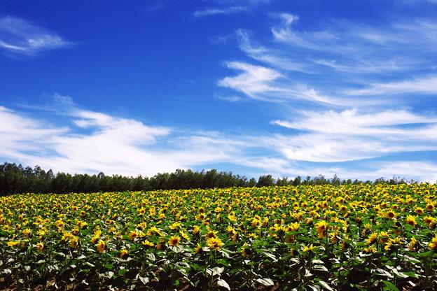 花や植物の写真